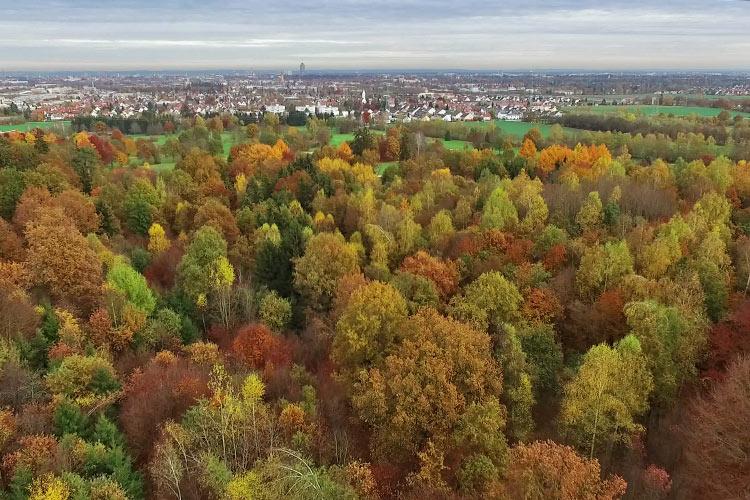 Erstes Luftvideo online. Biken im Deuringer Wald.